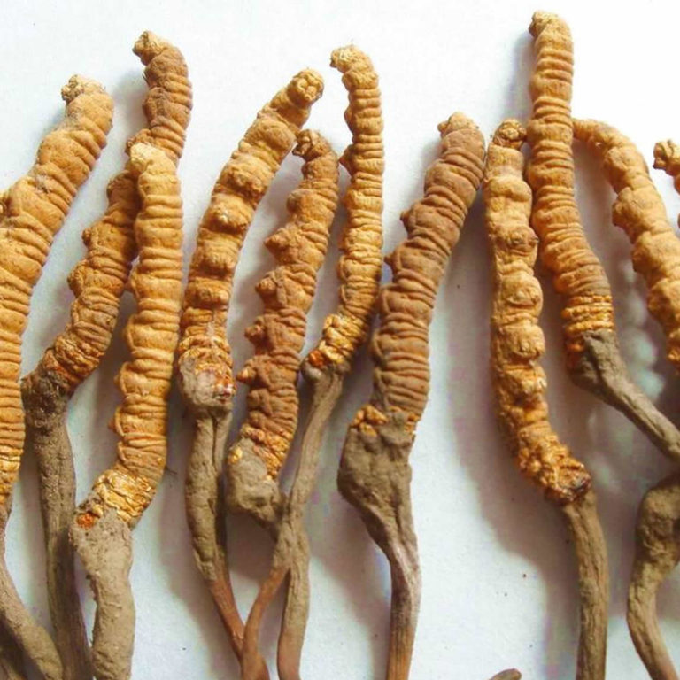 Cordyceps – 14 Health Benefits Backed by Science