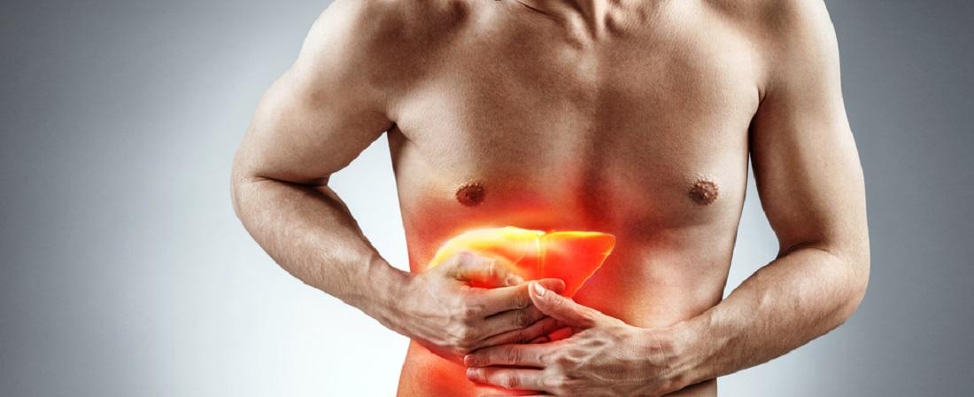 Digestive organs, blood composition, liver function, immune system etc., immune system etc.
