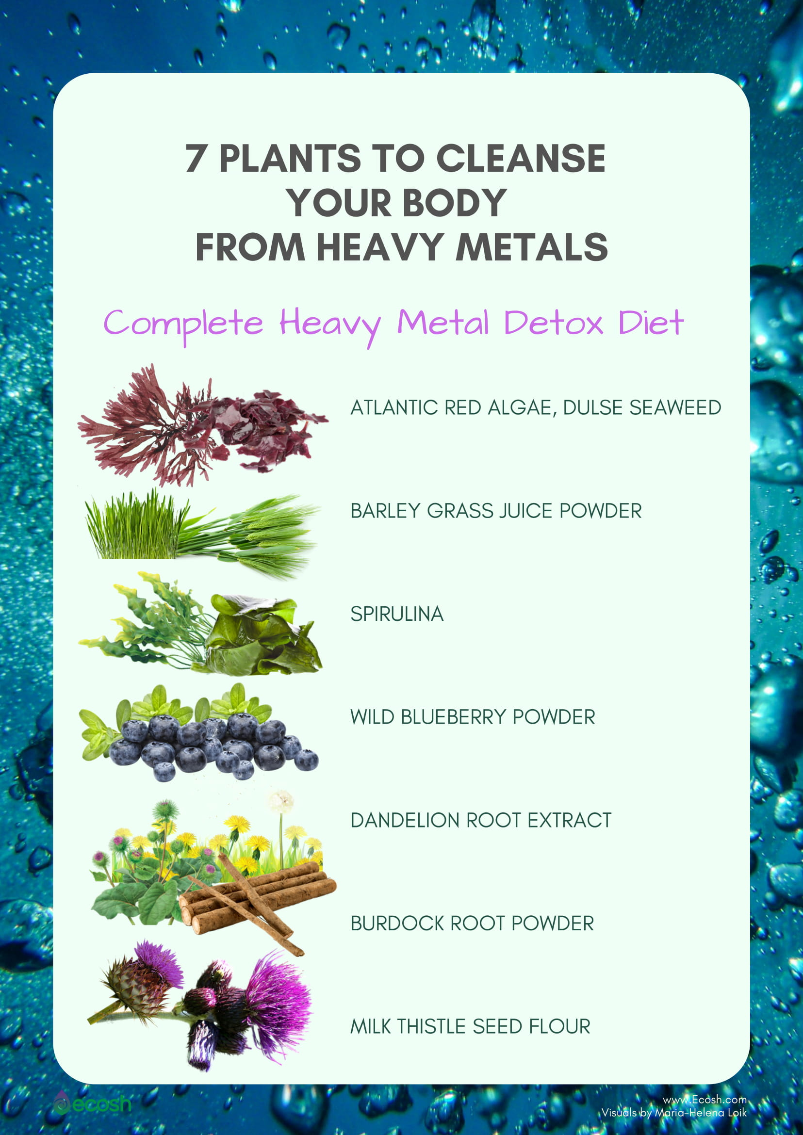 Full Detox 7 Plants To Cleanse Your Body From Heavy Metals Ecosh Life