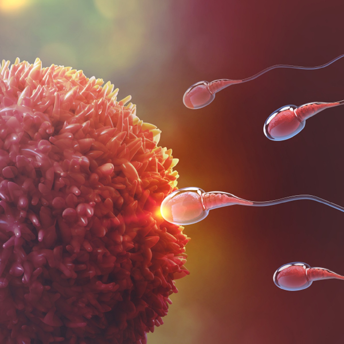 INFERTILITY – Risk Factors and Causes of Male and Female Infertility