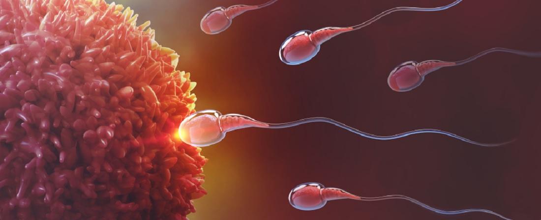 ovary and sperm_fertility