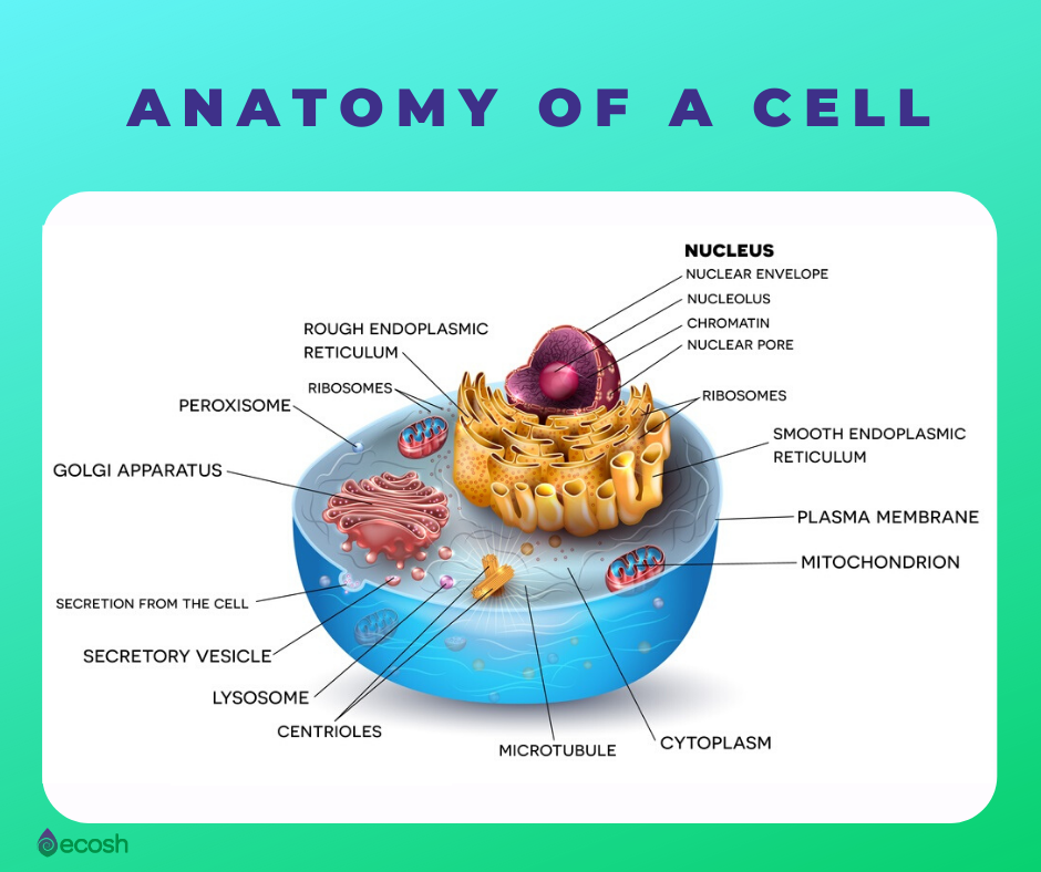 Ecosh.com_anatomy of a cell