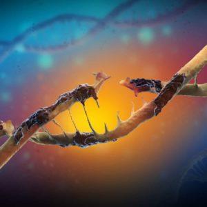 oxidative_stress_DNA_damage_free radicals damage