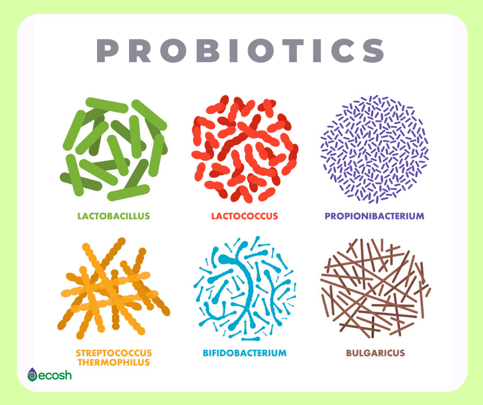 Ecosh_Probiotics_Healthy_gut