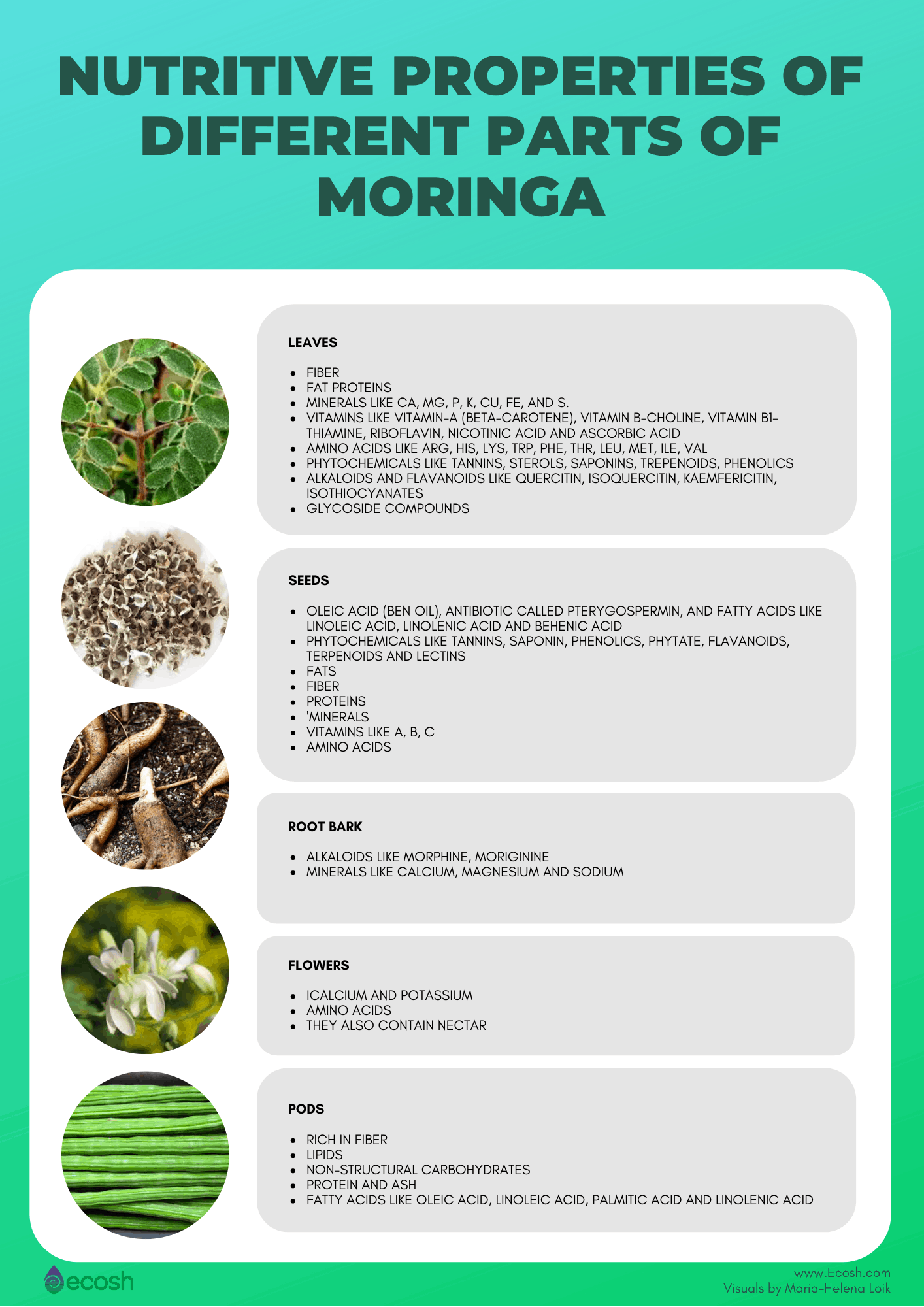 Ecosh_The_Nutrient_Content_Of_Different_Parts_Of_Moringa_Oleifera_Leaves_Moringa_Nutrients_Moringa_Roots_Moringa_Seeds_Moringa_Pods_Moringa_Flowers