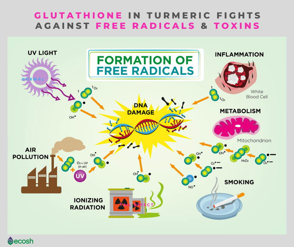 Glutathione in Turmeric Fights Against Free Radicals and Toxins