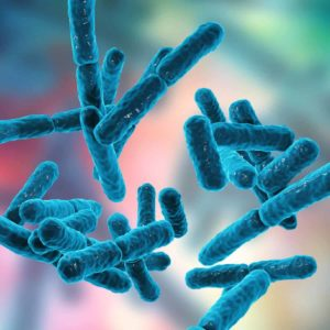 17 Types of Good Bacteria - The List of Most Beneficial Species of Probiotics Lactobacillus and Bifidobacteria_Bifidobacteria_types