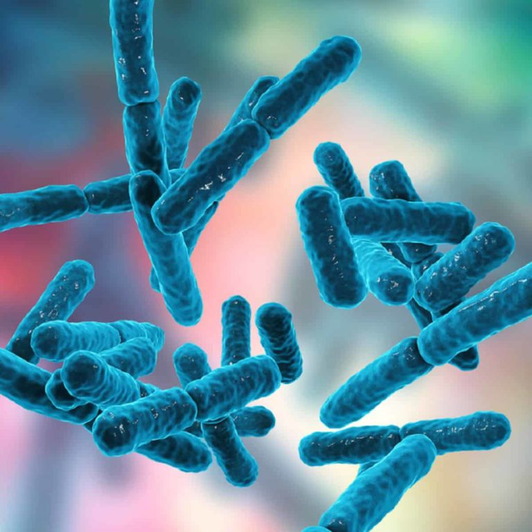 17 TYPES OF GOOD BACTERIA – The List of Most Beneficial Species of Probiotics Lactobacillus and Bifidobacteria