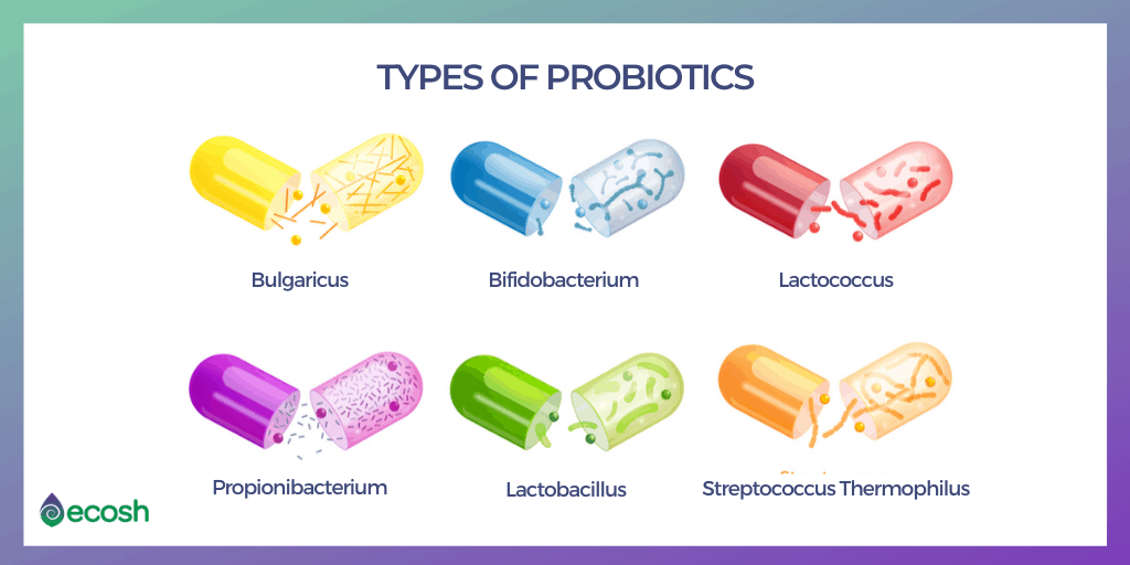 17 Types of Good Bacteria_The List of Most Beneficial Species of Probiotics Lactobacillus and Bifidobacteria_Types_of_Probiotics_Probiotics_Types_Lactobacillus_and_Bifidobacteria_Species
