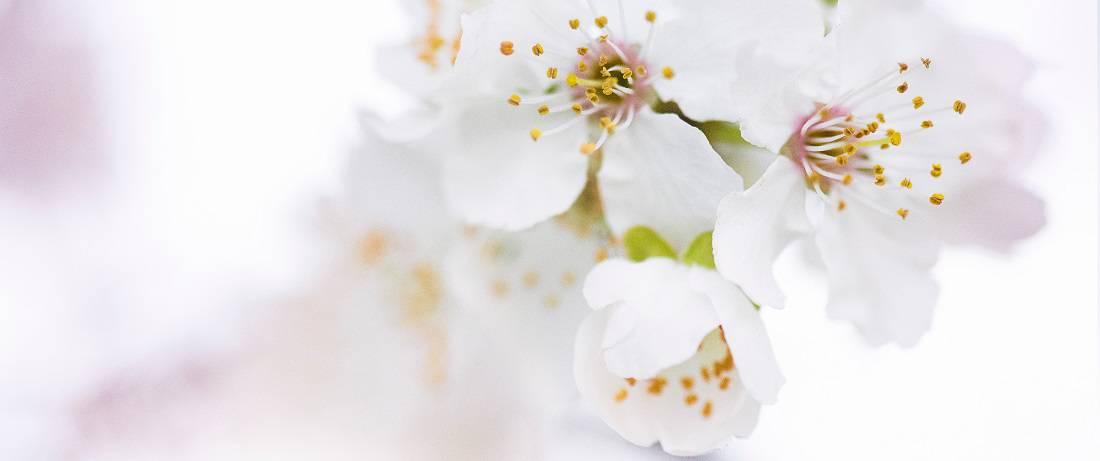 Ecosh_Beauty_Supplements