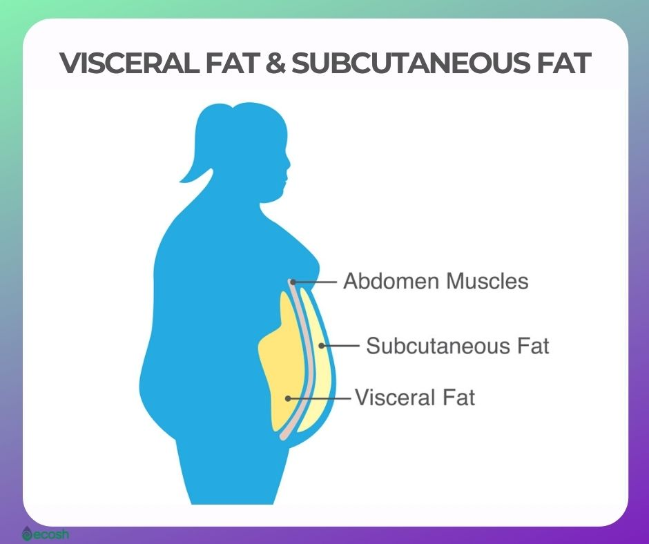 DIFFERENCE BETWEEN VISCERAL FAT AND SUBCUTANEOUS FAT AND HOW TO GET RID OF VISCERAL FAT