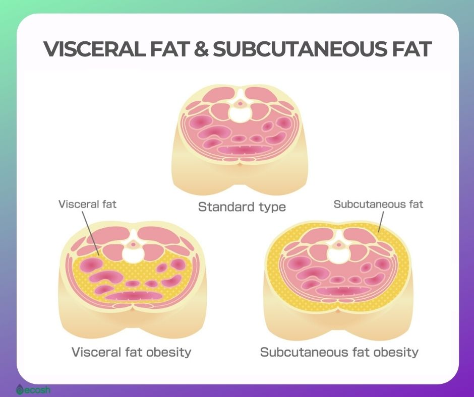 VISCERAL FAT AND SUBCUTANEOUS FAT ahy is VISCERAL FAT DANGEROUS