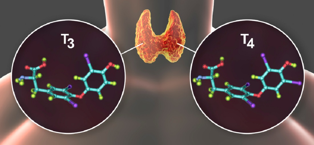 Thyroid_Hormones_T3_and_T4_Thyroid_Replacement_Medications_Underactive_Thyroid_Levothyroxine_and_Triiodothyronine
