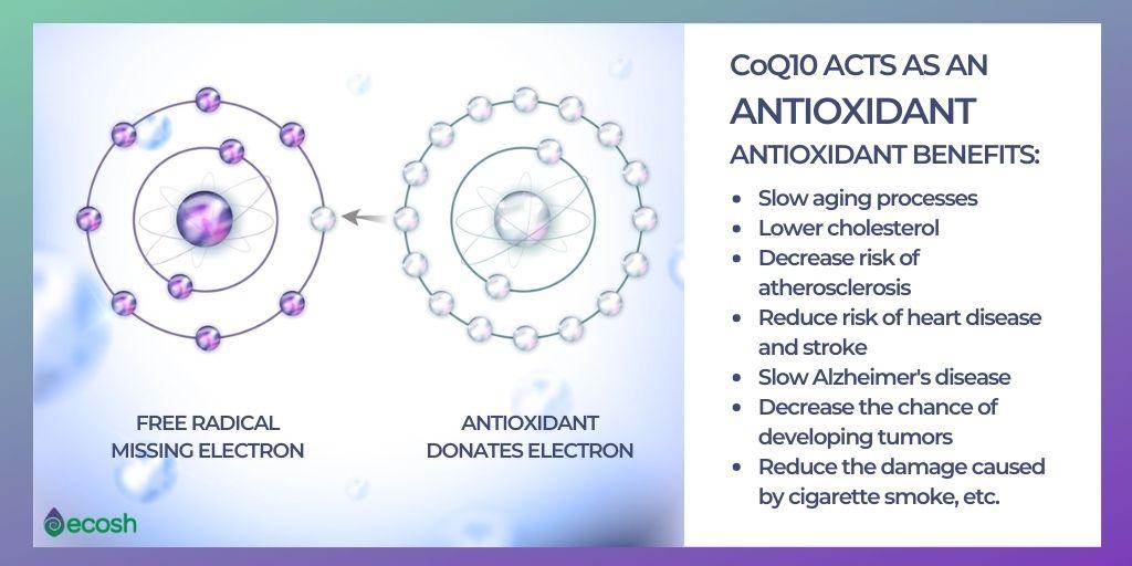 Coenzyme_Q10_Co_Q10_Antioxidant_Effects