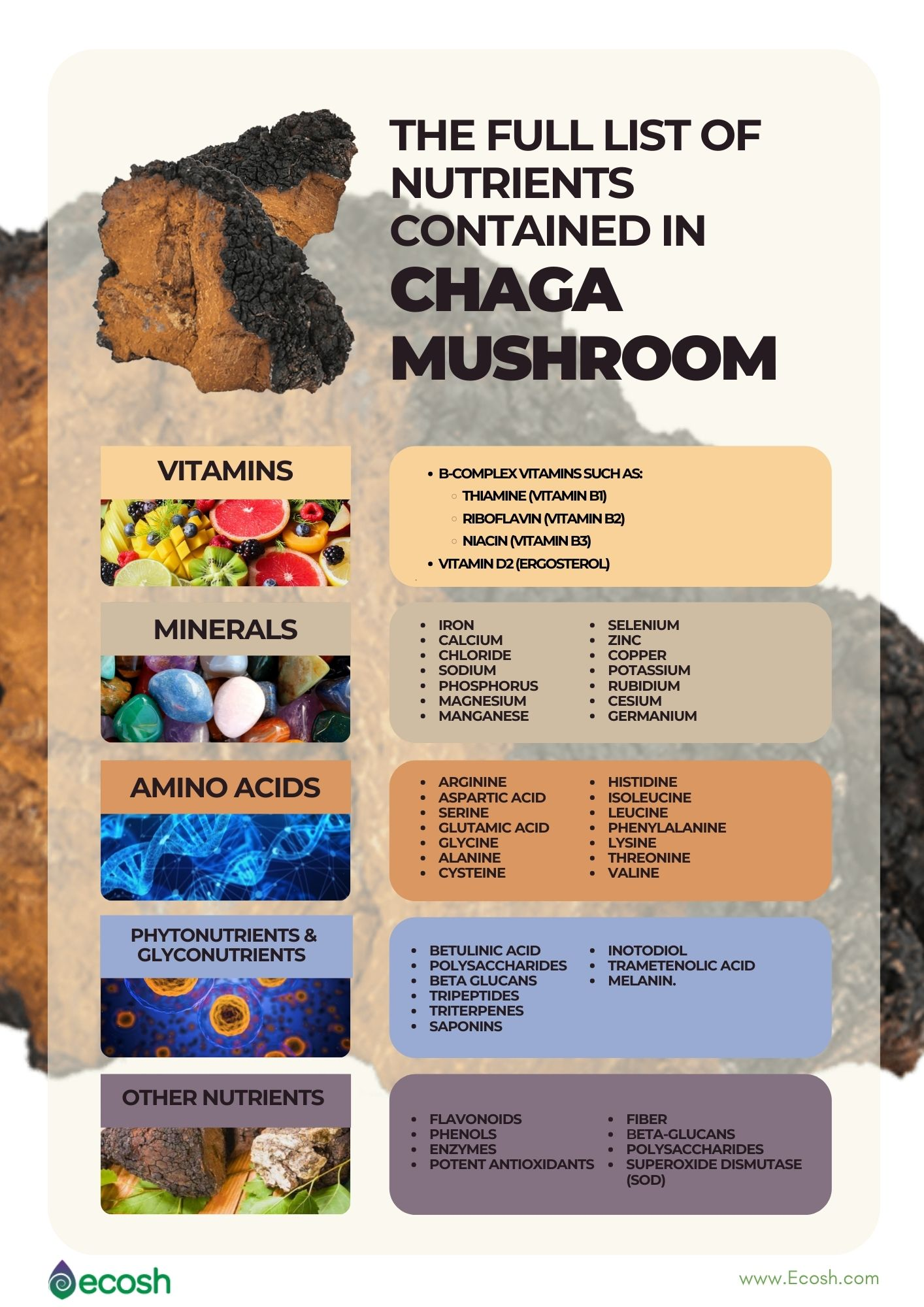 Ecosh_The_Full_List_of_Nutrients_In_Chaga_Vitamins_In_Chaga_Minerals_in_Chaga_Amino_Acids_In_Chaga_Mushroom_Antioxidants_In_Chaga_SOD_In_Chaga_Mushroom_Vitamins_in_Chaga_