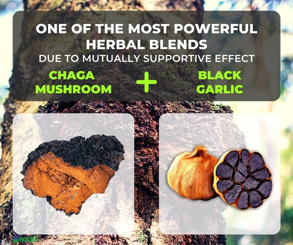 Herbal_Treatment_Herbal_Remedies_Medicinal_Mushrooms_Chaga_Mushroom_and_Black_Garlic_Most_Powerful_Herbal_Mixtures_Herbal_Supplements_Anticancer_Antiagaing